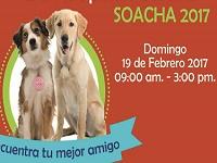 Domingo de jornada de adopción canina en Soacha