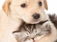 Nueva jornada de adopción de mascotas en Bogotá