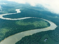 Alianza para frenar la deforestación en el Amazonas