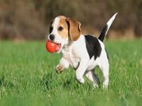Más de 300 perros rescatados en Tabio podrían volver a la calle
