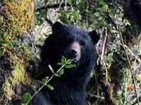 Indignación en Cundinamarca por asesinato de oso andino