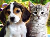 Perros y gatos tendràn cèdula