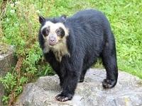 Abren investigación por muerte de oso en el departamento