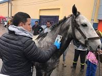 En Faca, dispositivo electrónico permite censar vehículos de tracción animal
