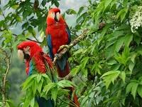 Se toman medidas para detener el tráfico de flora y fauna