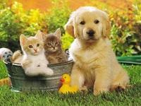 Más de 1.600 mascotas han sido vacunadas en Facatativá