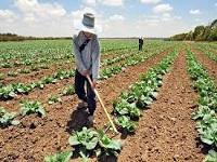 Desarrollo rural tendrá 513 alianzas productivas