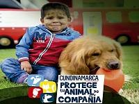 Jornada de cuidado responsable de mascotas en Facatativá