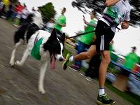 Regularán a paseadores de perros en Bogotá