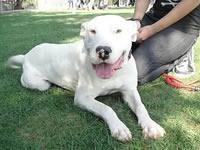 Perros Pit Bull están siendo arrojados a las calles de Soacha