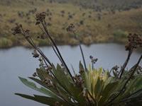 Comunidad propone proyecto de diseño urbano para recuperar el río Bogotá