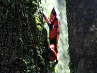 En peligro 2.700 especies por deforestación