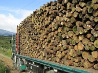Pacho quiere fortalecer los recursos forestales de su región