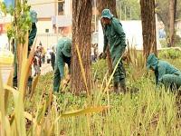 Policía Metropolitana sembró 2.000 árboles en la ciudad