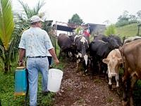 Anuncian inversión para el sector lácteo en Cundinamarca