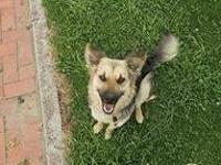 Jornada de adopción canina en Soacha