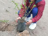 Siembran 3.000 árboles en el Humedal Neuta  de Soacha