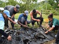 ONU desmanteló 750 caletas de las Farc