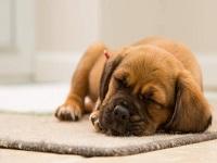 Dormir con su mascota le puede traer beneficios