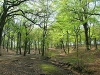 Preservación ambiental acogerá 70.000 hectáreas más
