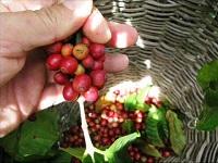 Pacho recibió donación internacional para mejorar su café