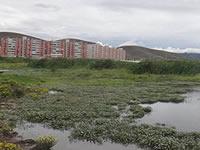 Actividades culturales y artísticas para preservar el Humedal Maiporé de Soacha