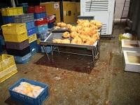 Decomisan seis toneladas de carne ilegal en el departamento
