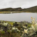 Más de $1,3 billones fueron aprobados para proteger el ambiente en Bogotá