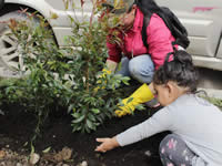 2.000 árboles más en Soacha