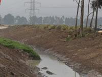 Codensa, Car y Alcaldía Municipal reforestarán zona del río Soacha