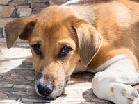 Últimas jornadas de esterilización canina y felina en Soacha