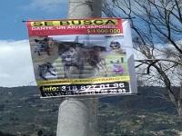 Denuncian banda dedicada a robar perros de raza en Bogotá y Cundinamarca