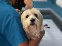 Bogotá ya cuenta con la nueva Unidad de Cuidado Animal