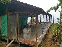 Avanzan métodos de producción de carne avícola en Guaduas