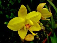Avanza en Cundinamarca proceso de conservación de orquídeas nativas