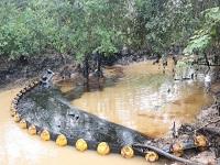 Inicia proceso sancionatorio contra Ecopetrol