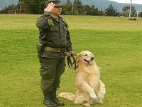 Colegios de Bogotá refuerzan seguridad con perros antinarcóticos