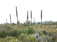 Cundinamarca hace reforestación para mitigar calentamiento global