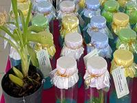 Cundinamarca fortalece el uso sostenible y conservación de orquídeas nativas