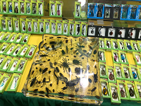 Fauna exótica fue incautada en la FILBo de Bogotá