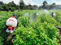 Aumentaron cultivos ilícitos en el país
