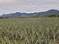 Pequeños productores agrícolas se consolidan en cuatro provincias