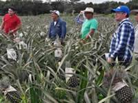 Se fortalecen pequeños productores de Cundinamarca