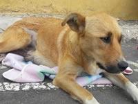 Jornada de esterilización canina y felina en Sibaté