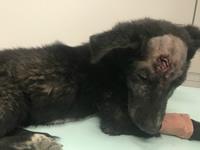 Denuncian a habitante de Cazuca por asesinar  perros