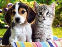 Mascotas de Soacha podrán participar en concurso de disfraces