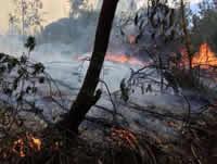 Sanciones para quienes propicien incendios forestales en Cundinamarca