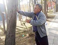 Riesgo de caída de árboles alarma a comunidad de Quintas de Santa Ana