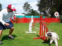 Centro Canino de la Cruz Roja abre sus puertas para mascotas en Bogotá