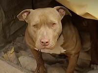 En Soacha dejan perros heridos en un lote vacío